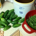 Pickling cucumbers & fixins