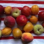 Stone fruits!